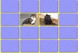 لعبة تذكر صور القطط